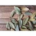 Listki oliwne