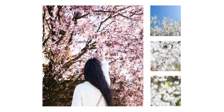 Wiosna na zdjęciach